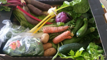 the veg box