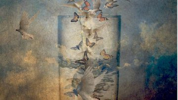Butterflies flying into a glass