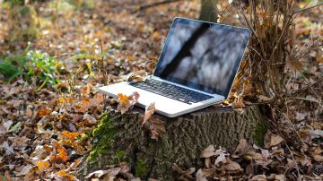 A laptop placed on a tree stump in the woods