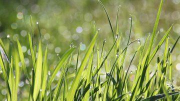 Close up grass