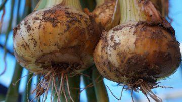 2 onions