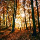 person walking through autumnal woods