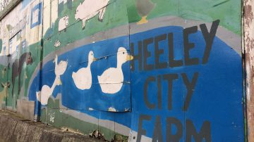 Heeley City Farm