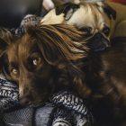 Community stories of pet positivity