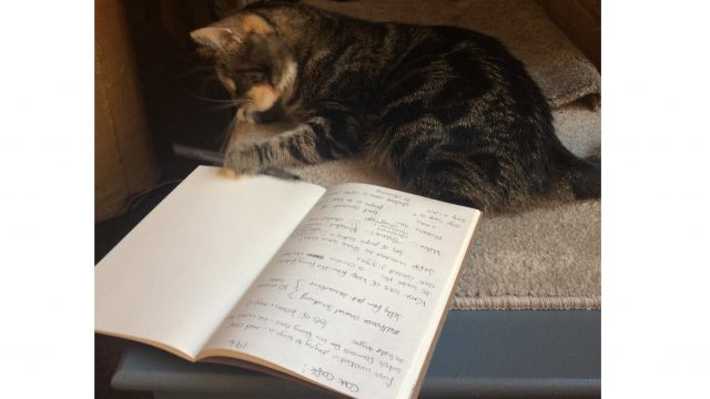 cat playing with reporters notebook