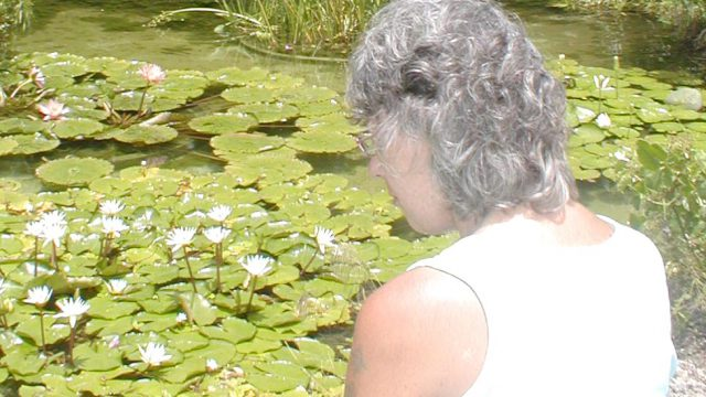 woman looking into a lily pond