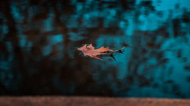 leaf on calm water