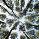 photo looking up into trees