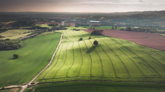 field with sun shining