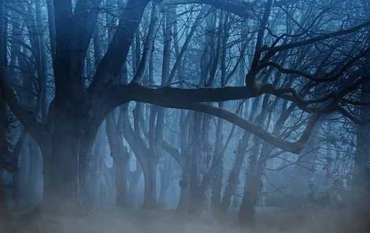 misty forest in half light
