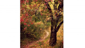 woodland path in autumn