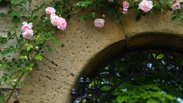 roses around an archway