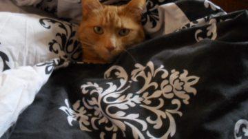 A Four-Legged Therapist, Bobbi the cat