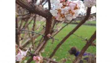 spring blossom on a tree branch