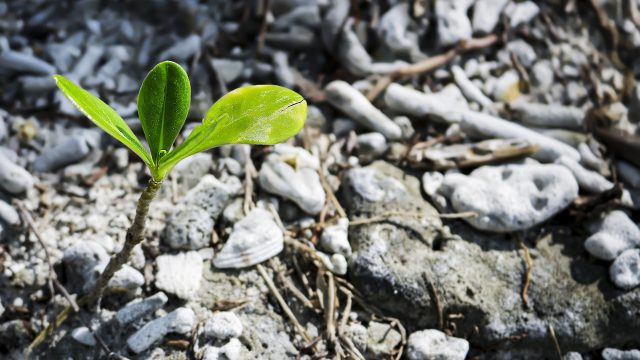 Seedling growing out of the earth