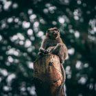 monkey sat on a tree stump